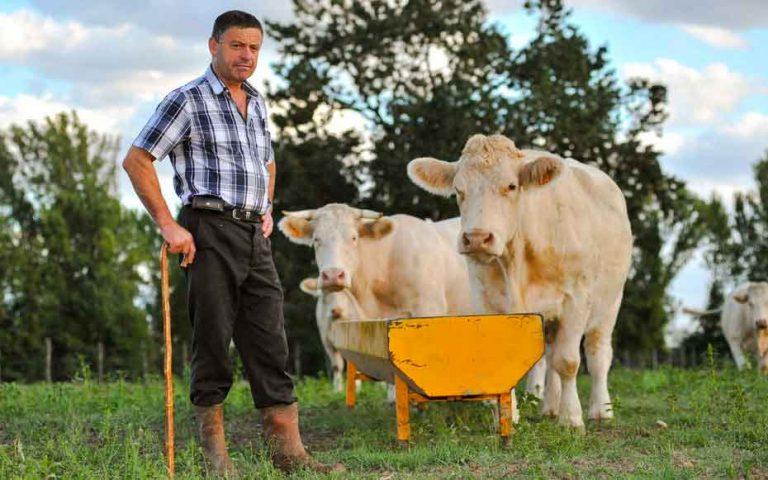 paysan vache